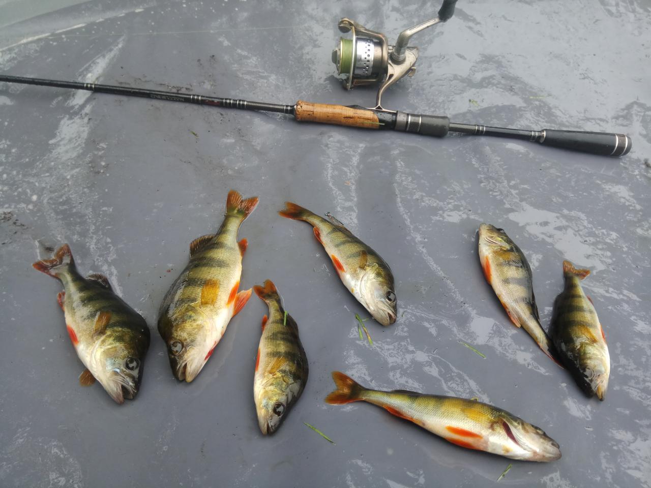 Долгожданное субботнееутро и вот уже накачиваю лодку ) ... | Отчеты о рыбалке в Беларуси