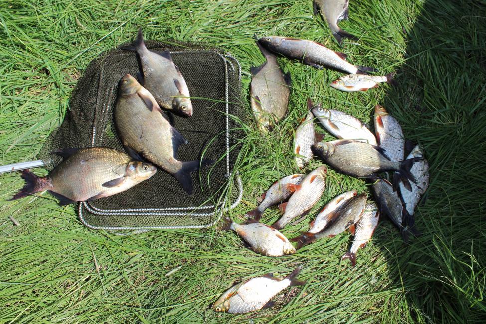 По случаю открытия сезона забрался в одно из ... | Отчеты о рыбалке в Беларуси
