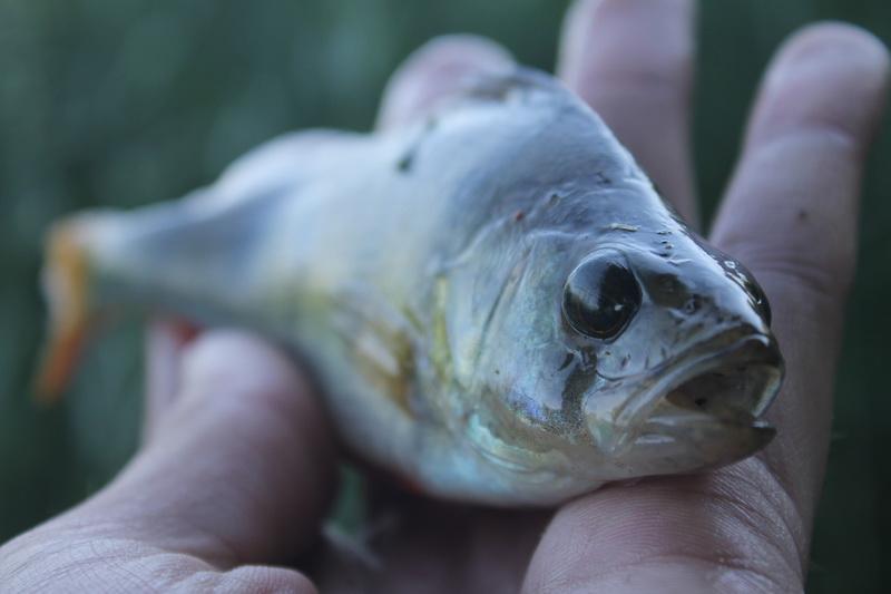 После семи пролетных рыбалок... | Отчеты о рыбалке в Беларуси