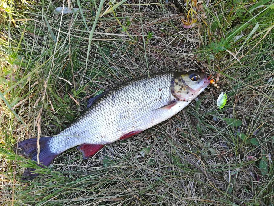 Прошедшее воскресенье. Вилия выше водохранилища. Отдыхал на реке ...   Отчеты о рыбалке в Беларуси