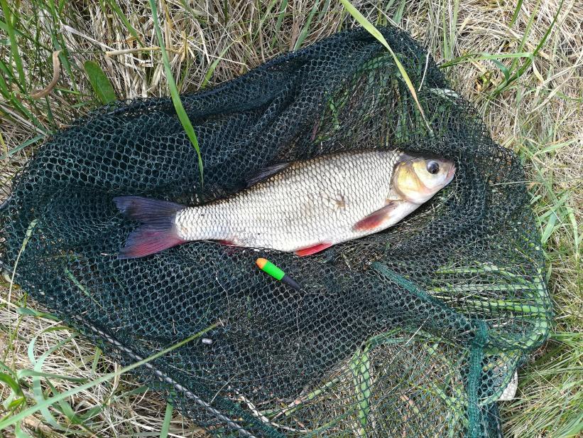 В воскресенье посетил красавицу Вилию выше водохранилища. Было ... | Отчеты о рыбалке в Беларуси