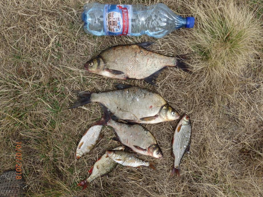 Cегодняпо полудню снова посетил свое любимое место. Тянет ... | Отчеты о рыбалке в Беларуси