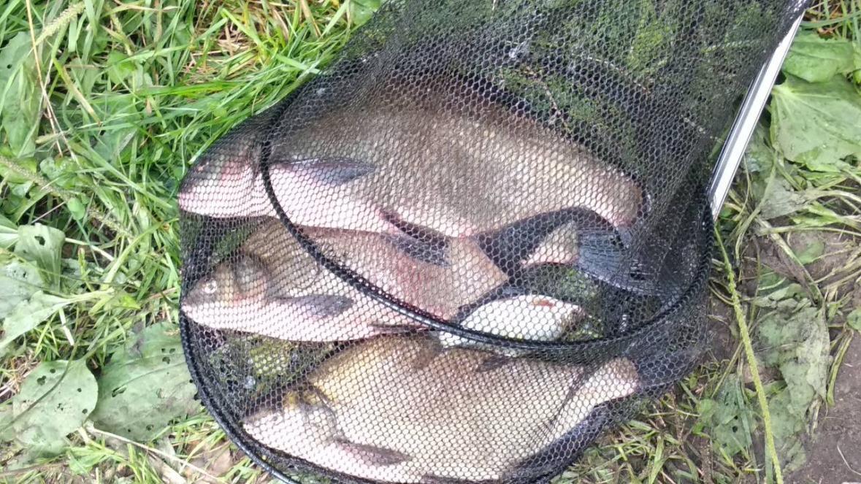 Обожаю реки, но на Свислочь выбрался впервые. В ... | Отчеты о рыбалке в Беларуси
