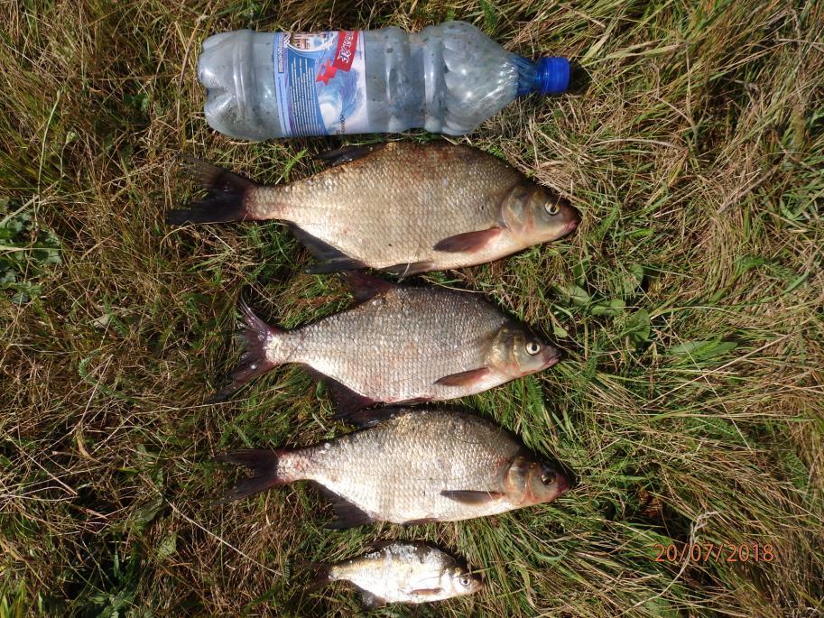 Сегодня с 12 до 16 часов вновь посетил ...   Отчеты о рыбалке в Беларуси