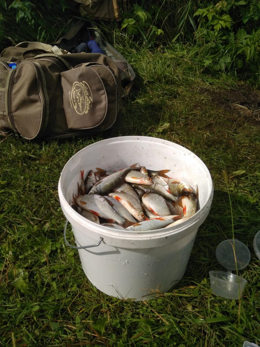 Вчера, мах 6м, плотва брала на все, перловка ... | Отчеты о рыбалке в Беларуси