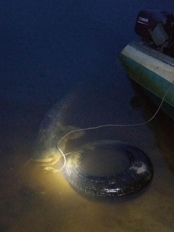 За неделю до длинных выходных внезапно выяснилось, что ... | Отчеты о рыбалке в Беларуси