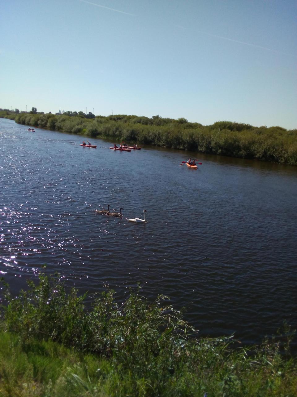Был сегодня на Немане в п.Любча, клёв был ... | Отчеты о рыбалке в Беларуси