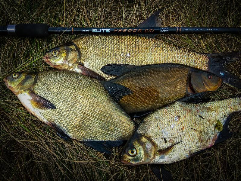 Неман. Утро. Выезд как всегда спонтанный. Из десятка ... | Отчеты о рыбалке в Беларуси