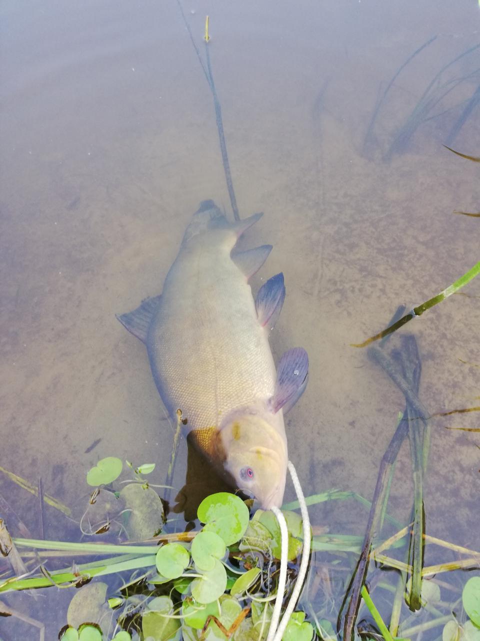 Провел выходные на реке(2 дня). Ловил в основном ... | Отчеты о рыбалке в Беларуси