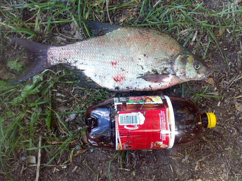 Рыбачил где-то с 20:00 вечера вчера до около ... | Отчеты о рыбалке в Беларуси