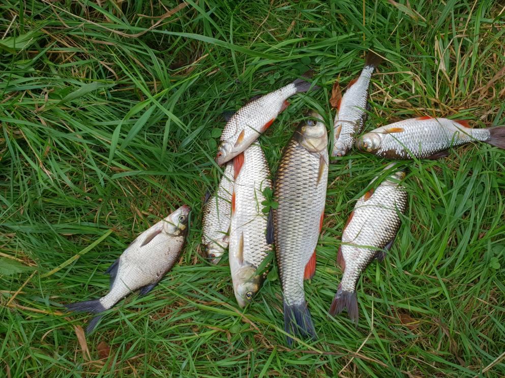 Сегодня рыбачил в районе Ляхович. Попал на клев ...   Отчеты о рыбалке в Беларуси