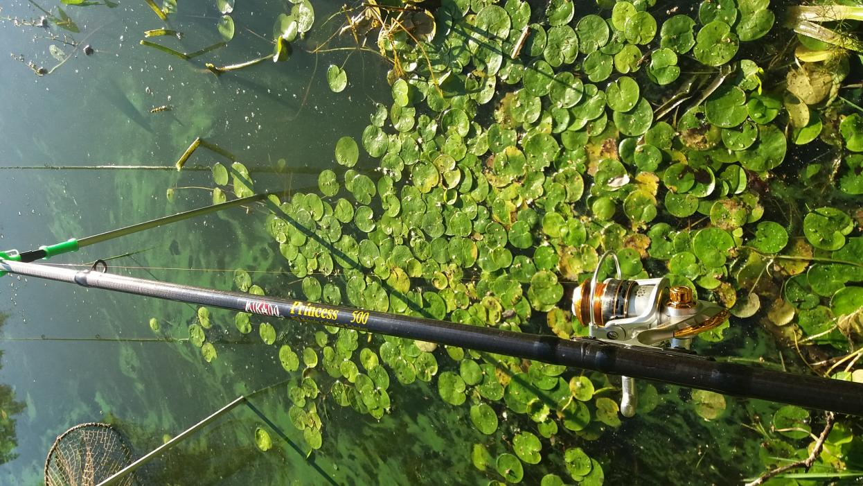 В среду 08.08.2018г. подъём в 4.00, быстрые сборы ... | Отчеты о рыбалке в Беларуси