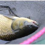 Рыбалка на летний боковой кивок. Трофейная рыбалка осенью 2018