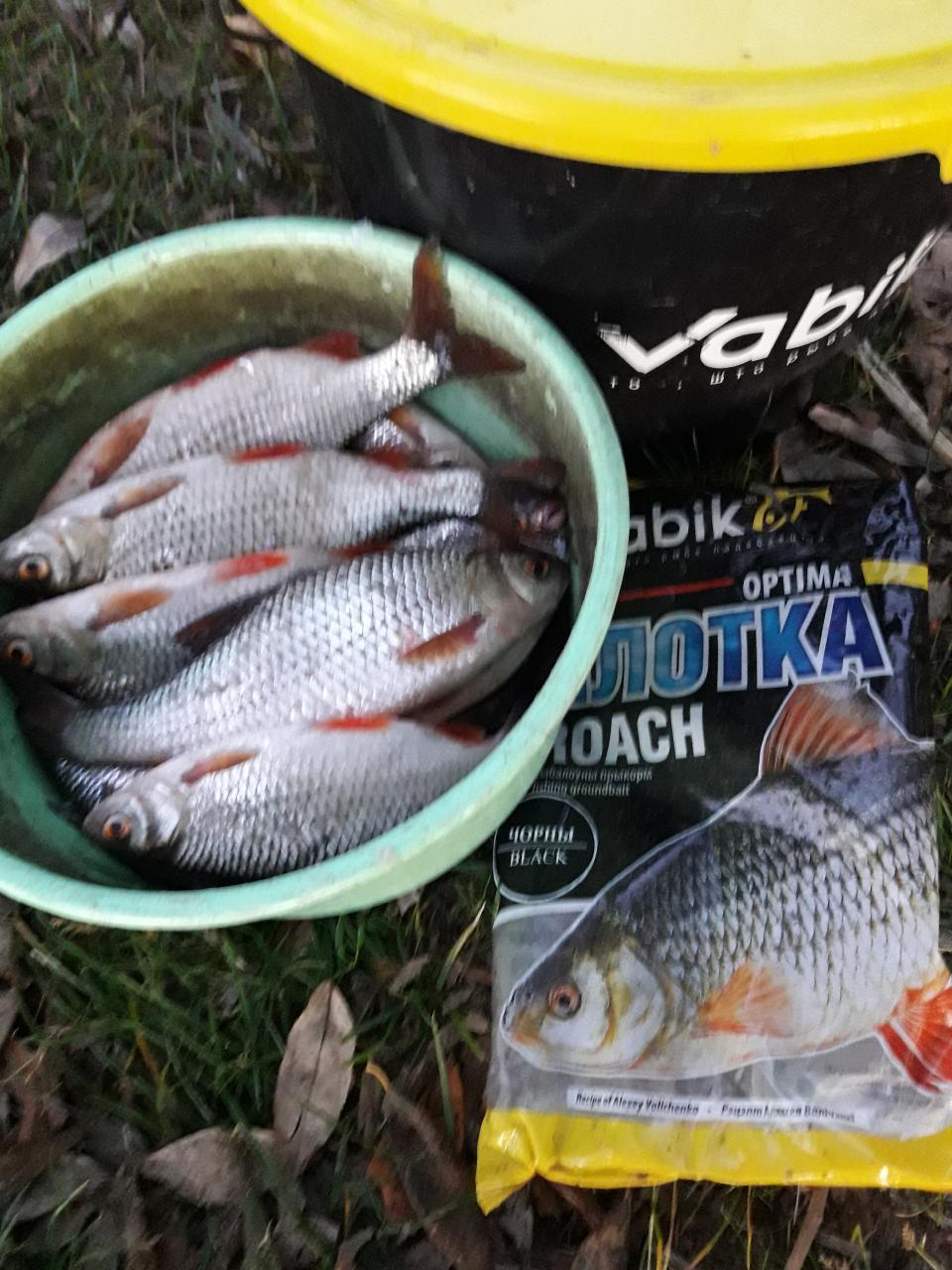 Осень нынче выдалась, я и не помню такой ...   Отчеты о рыбалке в Беларуси