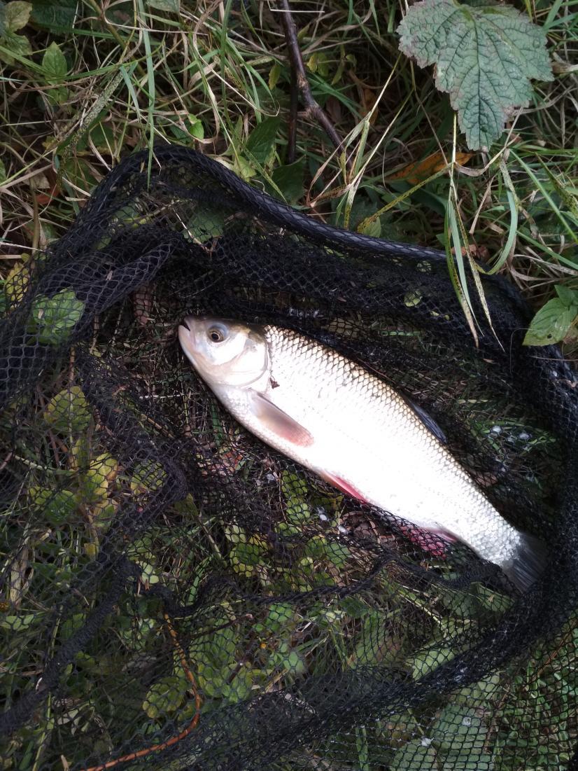 Всем привет!Был за Любчей дважды 28-29 сентября и ... | Отчеты о рыбалке в Беларуси