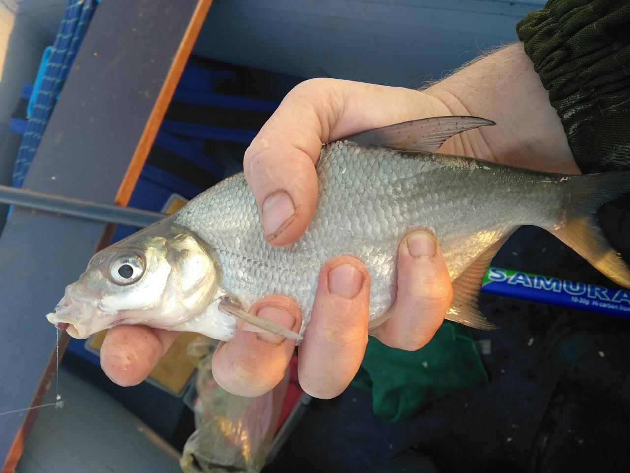 Закрывал сегодня сезон махом с лодки в районе ... | Отчеты о рыбалке в Беларуси