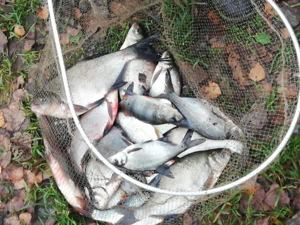 Сегодня был тот день на рыбалке, когда львиную ... | Отчеты о рыбалке в Беларуси
