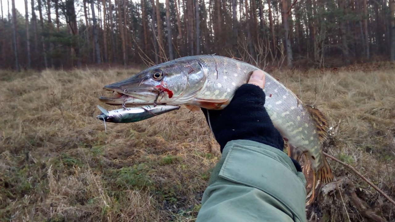 Вчера Вилия снова порадовала, не количеством поклёвок, так ... | Отчеты о рыбалке в Беларуси