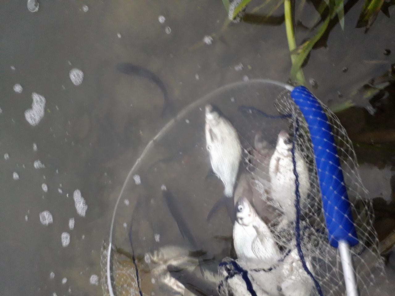 Вчера(1.11.2018) удалось вырваться из городской суеты и провести ...   Отчеты о рыбалке в Беларуси