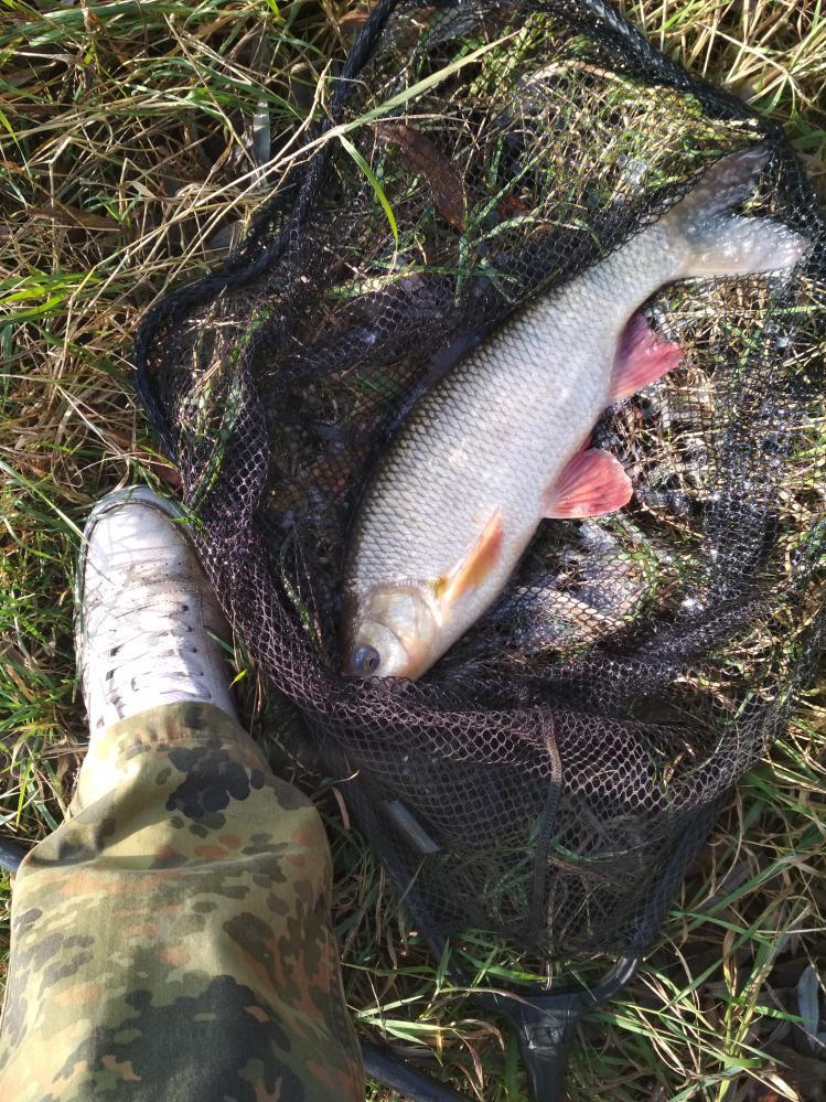 Всем привет!Вчера-сегодня, за Любчей. Погода вчера очень порадовала ...   Отчеты о рыбалке в Беларуси