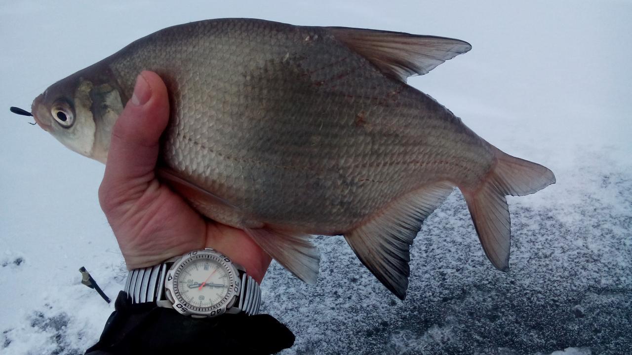 2 декабря 2018 г.( воскресенье)д. Ходорово :...Сезон собирался ...   Отчеты о рыбалке в Беларуси