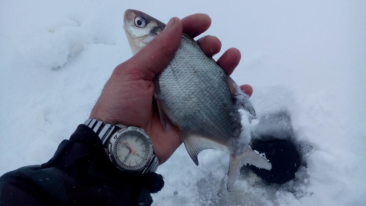 23 декабря 2018 г.( воскресенье)д.Ходорово :... Забегая вперёд ... | Отчеты о рыбалке в Беларуси