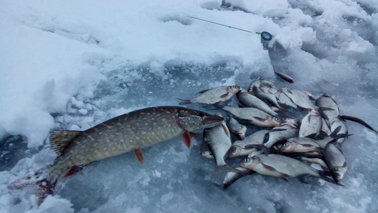 30 декабря 2018 г.( воскресенье)д. Ходорово :... Подлещик ... | Отчеты о рыбалке в Беларуси