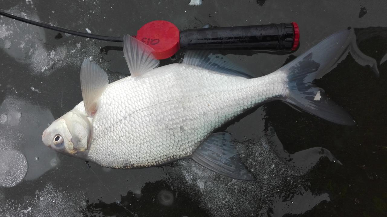 Как всегда отчётов ноль в теме, пока собрал ... | Отчеты о рыбалке в Беларуси