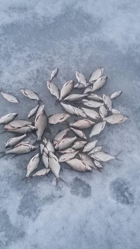 Куда делась нормальная плотва, в прошлом году ловилась ... | Отчеты о рыбалке в Беларуси