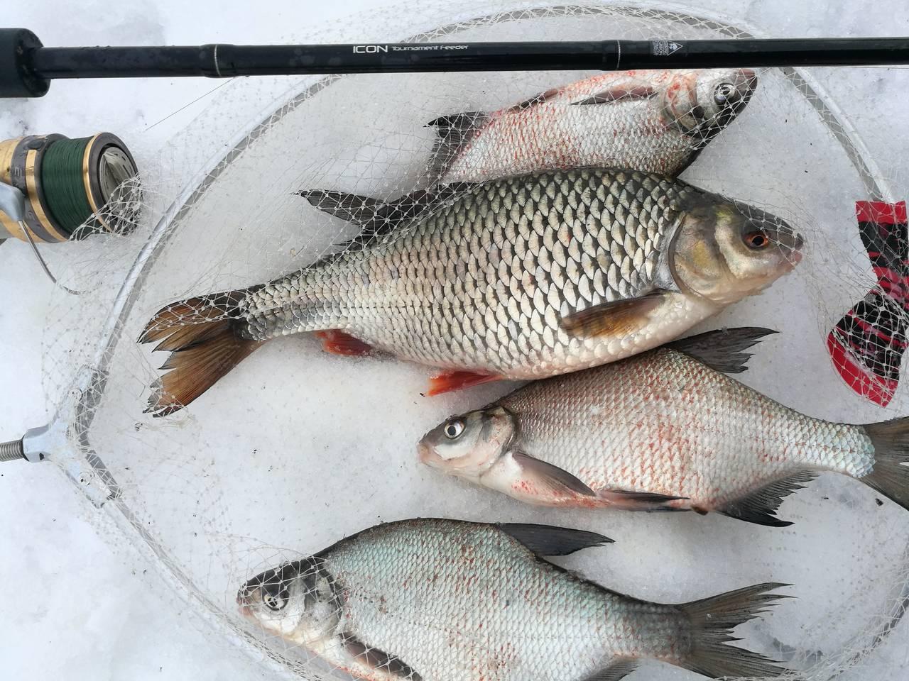 Отличное закрытие сезона открытой воды! Побил личный рекорд ... | Отчеты о рыбалке в Беларуси