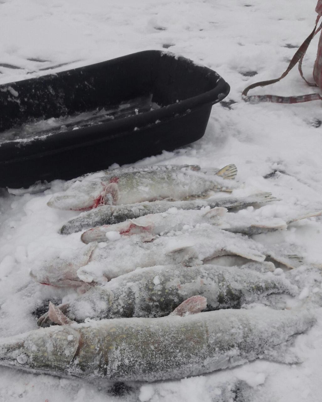 Щука есть на вв ,только клюёт по перволёдью ... | Отчеты о рыбалке в Беларуси