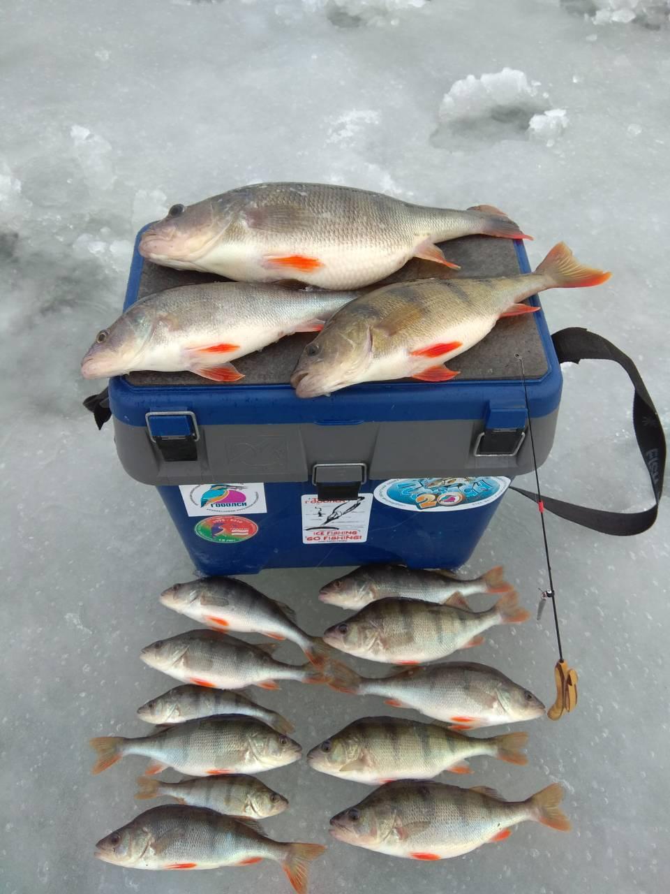 Вчера с товарищем прошлись по водохранилищу. Рыболовов можно ... | Отчеты о рыбалке в Беларуси