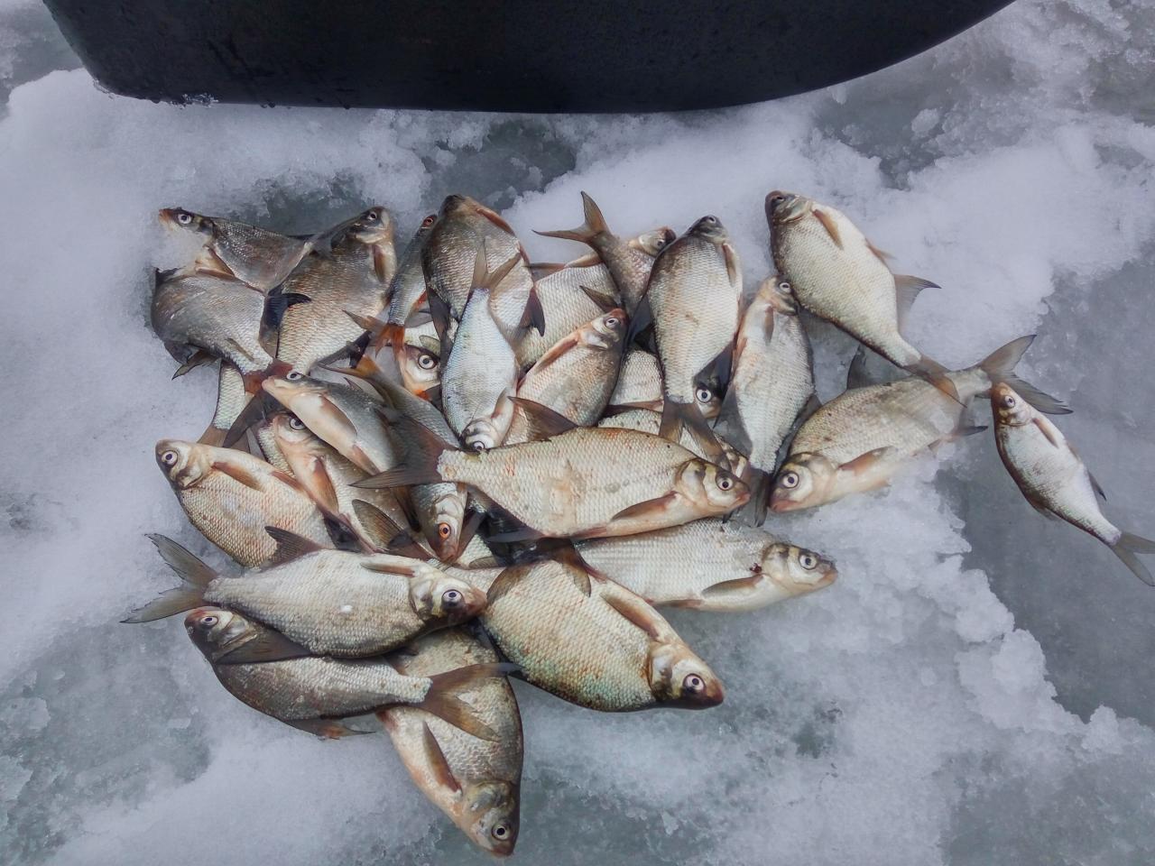 Всех с наступающим!Коротенький отчет за сегодня:Был в районе ... | Отчеты о рыбалке в Беларуси