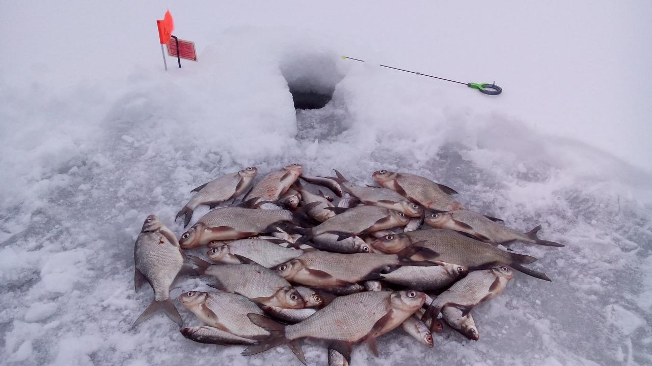 13 января 2019 г.( воскресенье)д. Ходорово :... Сказочная ... | Отчеты о рыбалке в Беларуси