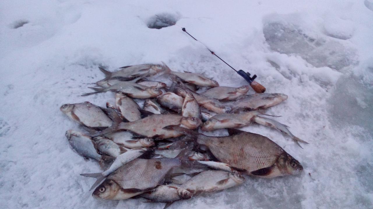 2 января 2019 г. ( среда)оз. Сесито ( ...   Отчеты о рыбалке в Беларуси