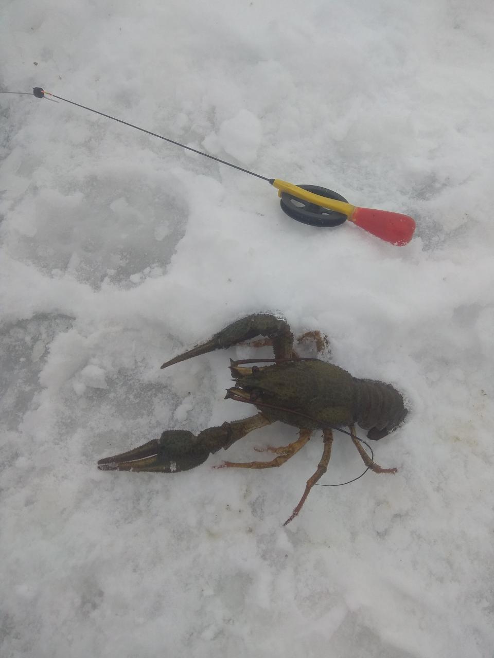 Были сегодня за МКАД.Сидели на русле.Я с утра ... | Отчеты о рыбалке в Беларуси