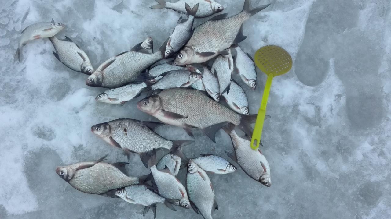 На этот раз решил уйти от толпы подальше ... | Отчеты о рыбалке в Беларуси