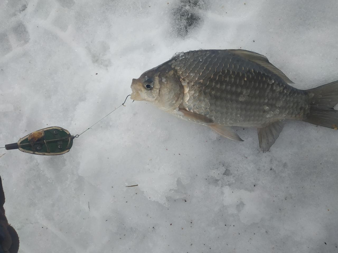 Пользуясь нулевой температурой за бортом , решил немного ... | Отчеты о рыбалке в Беларуси