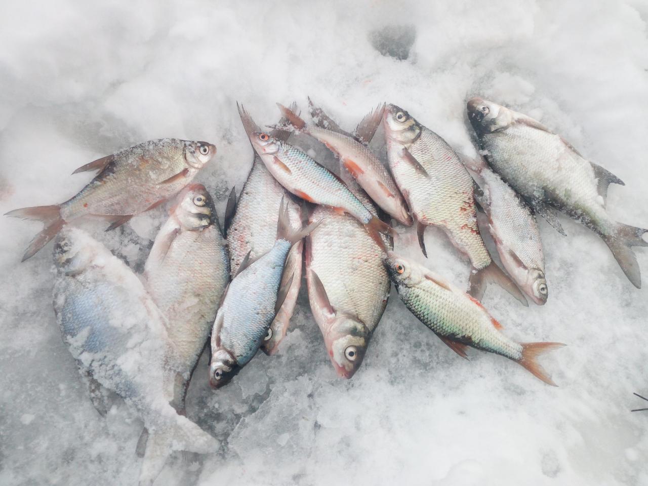 Сегодня и я выбраться на Море. Стартанул за ... | Отчеты о рыбалке в Беларуси