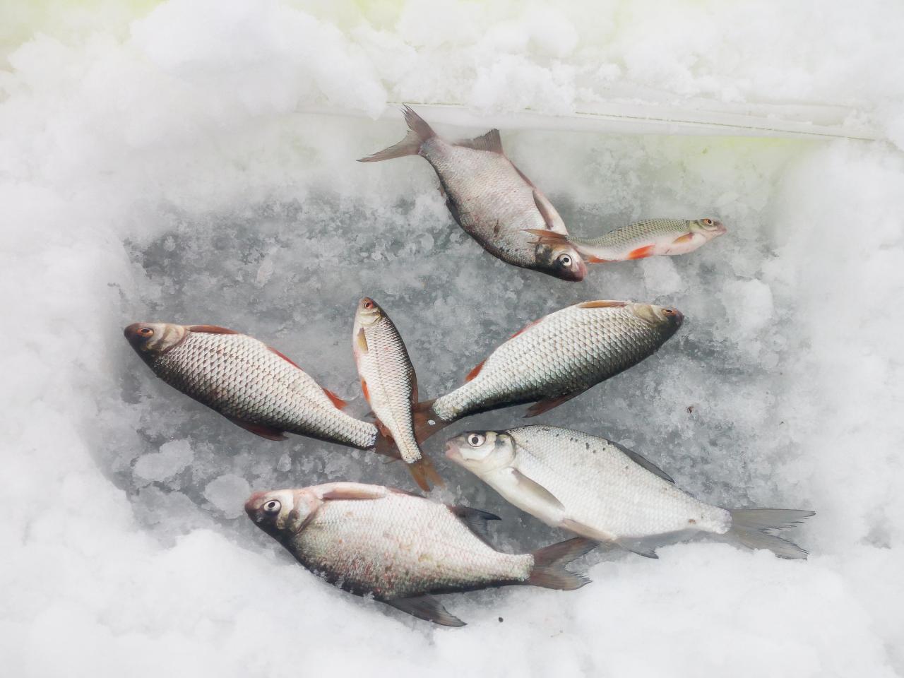 Сегодня выбрался на Море. Рано решил не ехать ... | Отчеты о рыбалке в Беларуси