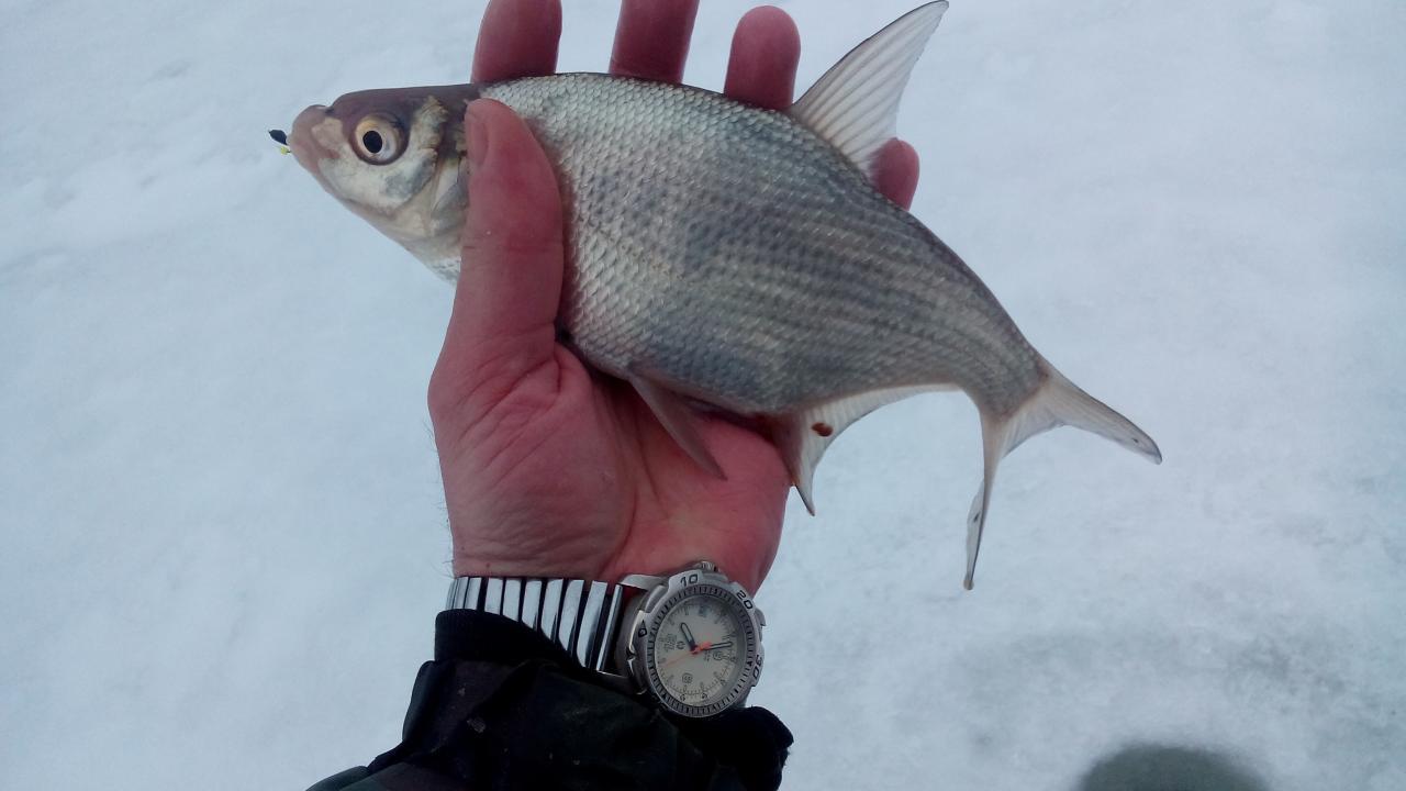 10 февраля 2019 г.( воскресенье)д. Ходорово :... Прошлые ... | Отчеты о рыбалке в Беларуси