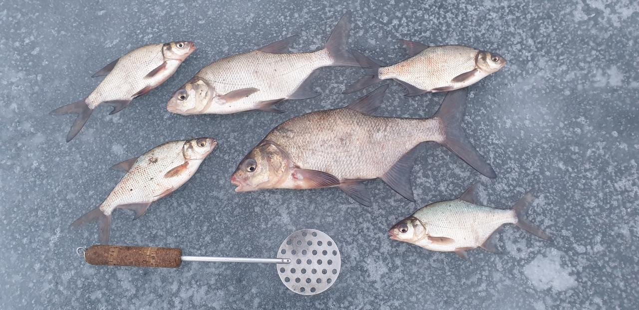 Давно не был на этом водоеме. Но решили ... | Отчеты о рыбалке в Беларуси