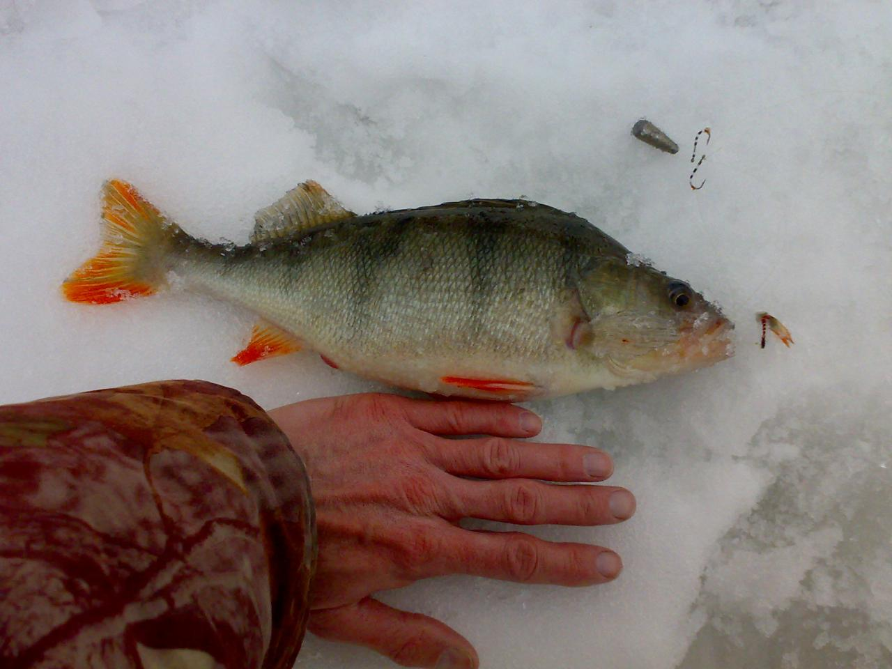 Очень краткоХоть с потугами, но поддаётся потихонечку Вилеечка ...   Отчеты о рыбалке в Беларуси