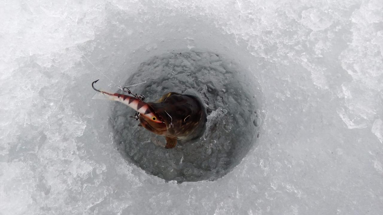 Пара кратких отчётов о коротЕнечких вечерних предзакатных балансирных ...   Отчеты о рыбалке в Беларуси