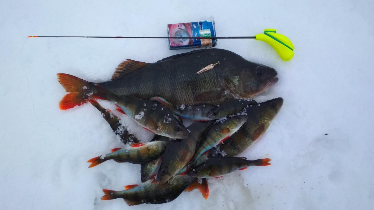 Прекрасный день провел на оз. Селява 1.02.2019.Окунь вообще ... | Отчеты о рыбалке в Беларуси