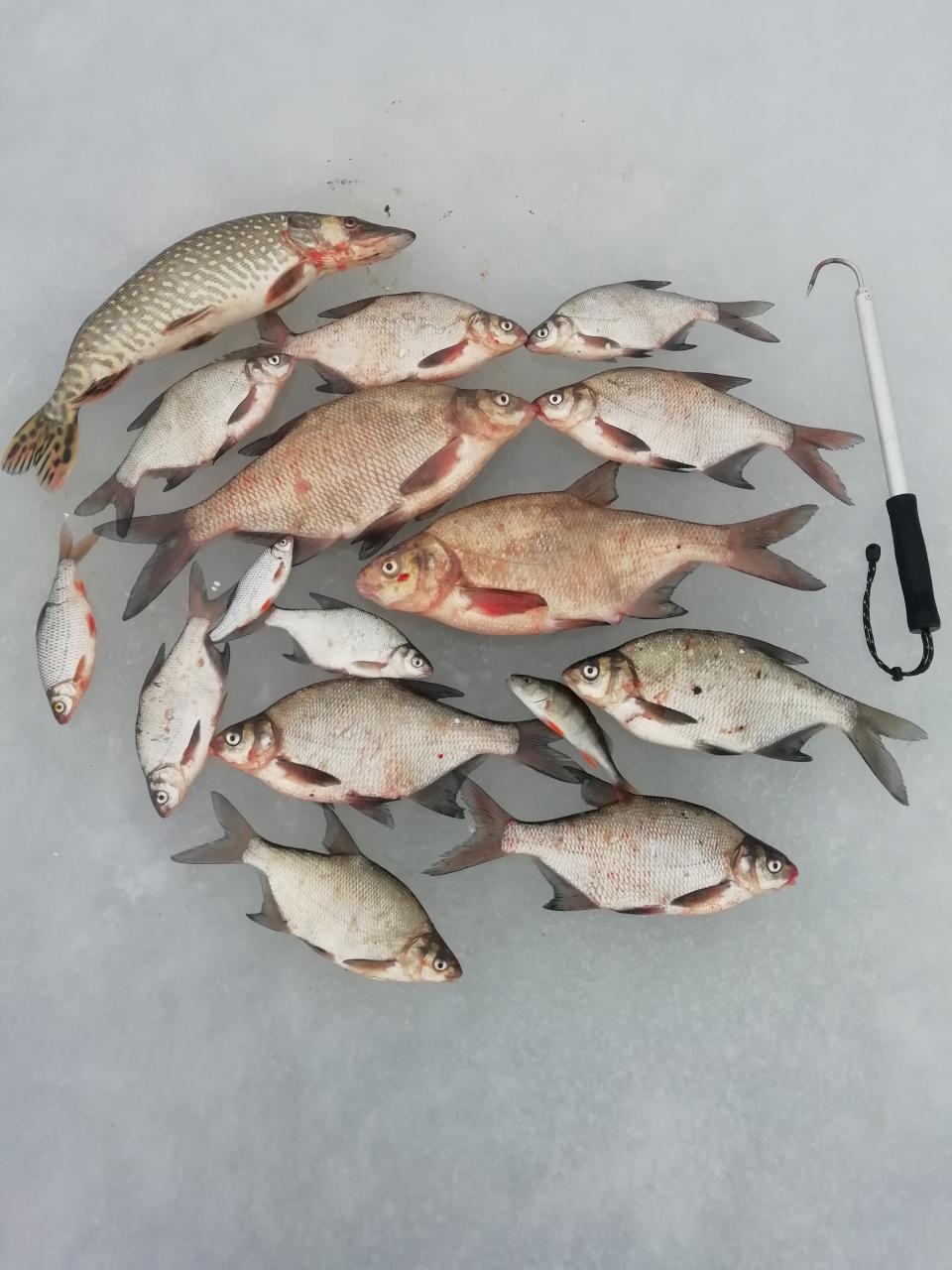С субботы на воскресенье. Матчицы. Глубина 6,5 метров ... | Отчеты о рыбалке в Беларуси