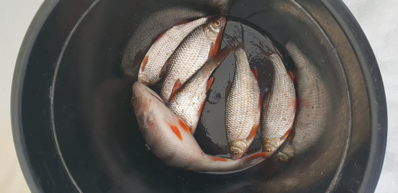 Сегодня на Лукомльском одна из худших рыбалок. Ловил ... | Отчеты о рыбалке в Беларуси