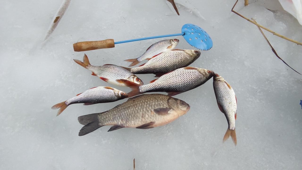 Сегодня, вчера, позавчера немного половили. Позавчера плотвиный деньhttp://www.brik.org/attachment.p ... | Отчеты о рыбалке в Беларуси
