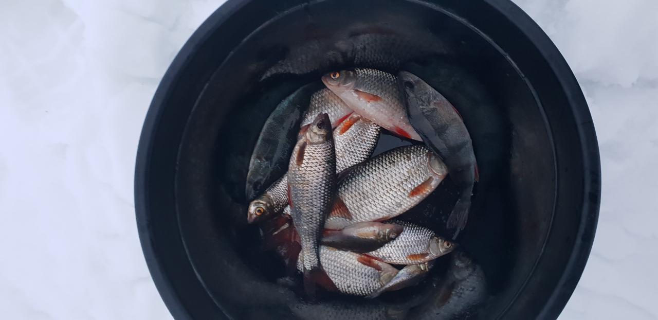 Вчера сил на отчет уже не было. По ... | Отчеты о рыбалке в Беларуси