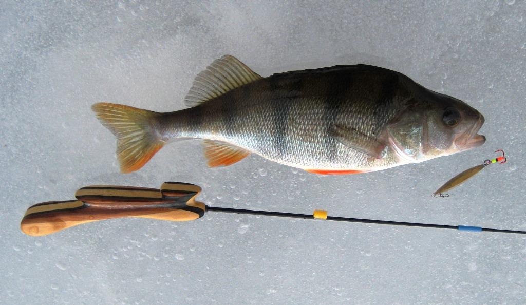 Искали вдвоем, видели в камеру красивые коряжки и окуней ... | Отчеты о рыбалке в Беларуси